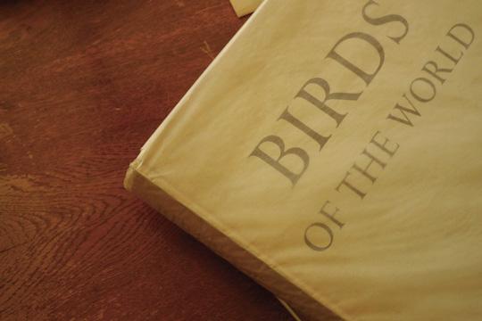 birdoftheworld01.jpg