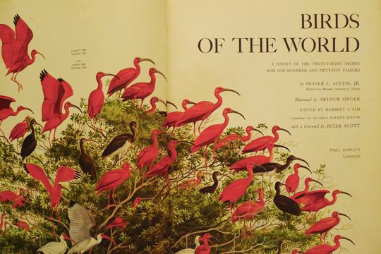 birdoftheworld11.jpg