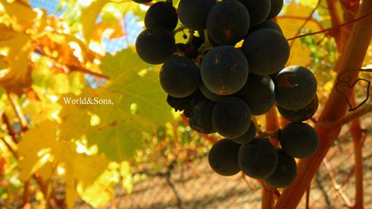 grape0407%2000.jpg