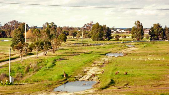 kangaloo1010%2002.jpg