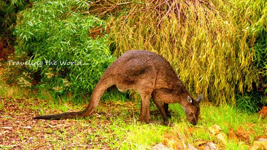 kangaroo%20bunker%2000.jpg