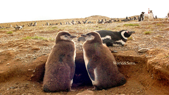 penguin00.jpg
