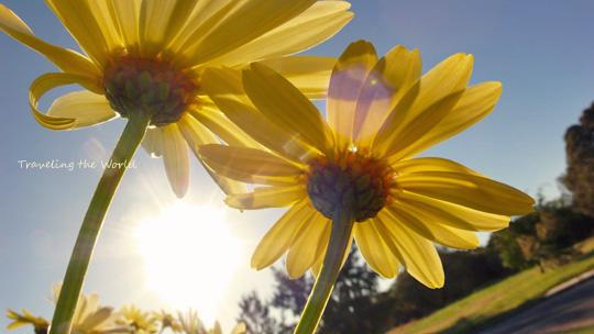 spring1015%2002.jpg