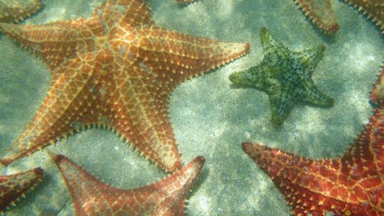 starfish00.jpg