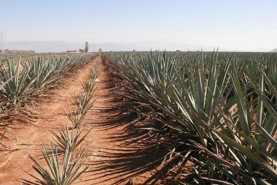 tequila01.jpg