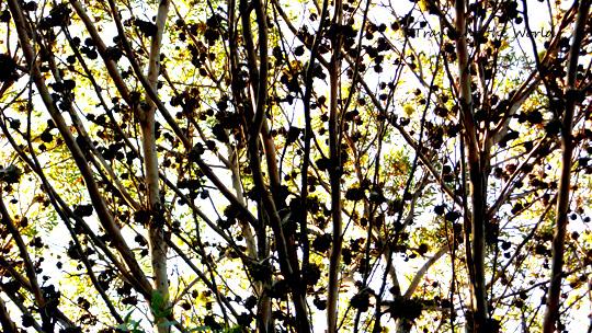 treehouse0817%2000.jpg