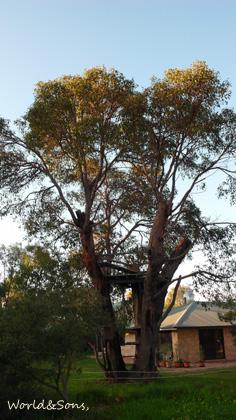 treehouse0817%2001.jpg